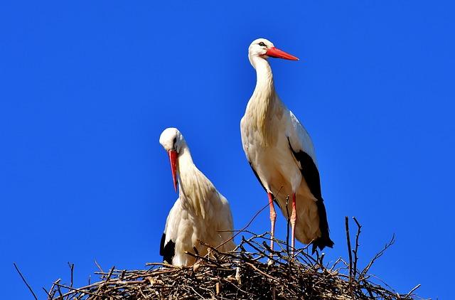 ドイツ国鳥シュバシコウ