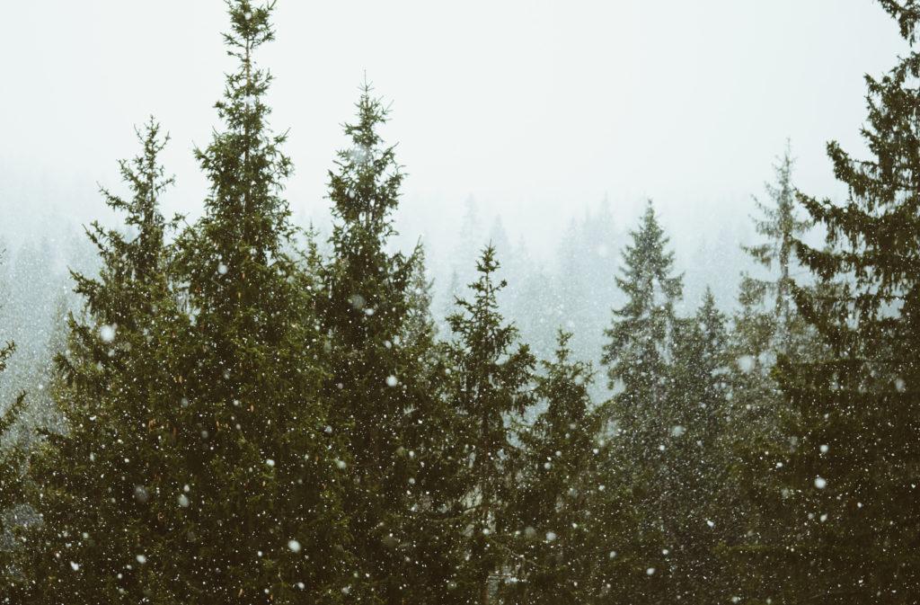 クリスマスツリー モミの木
